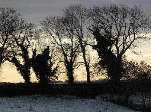 january-snow