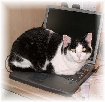 cheryl-cat