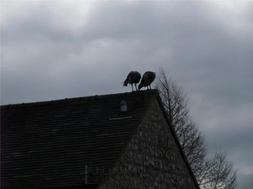 Vultures?