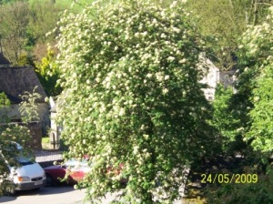 keith's tree