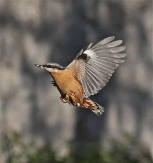 nuthatch img 0197 copy_748x800