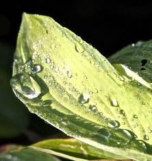 rain-c