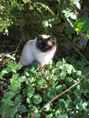 cat3 (2)